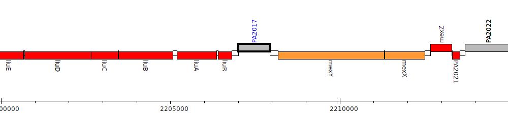 Overview: PA2017, Pseudomonas aeruginosa PAO1